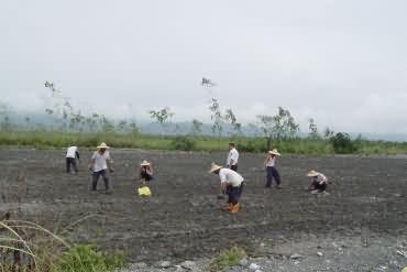 提供農忙協力-玉米田種植